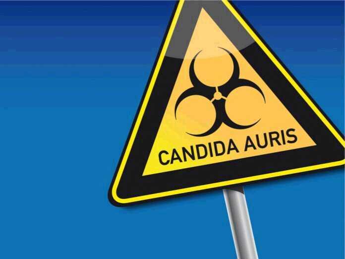 Candida Auris