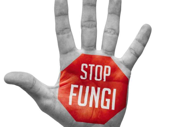 how your body fights fungal infections