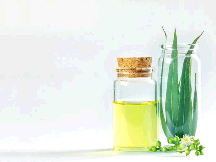 eucalyptus oil for toenail fungus