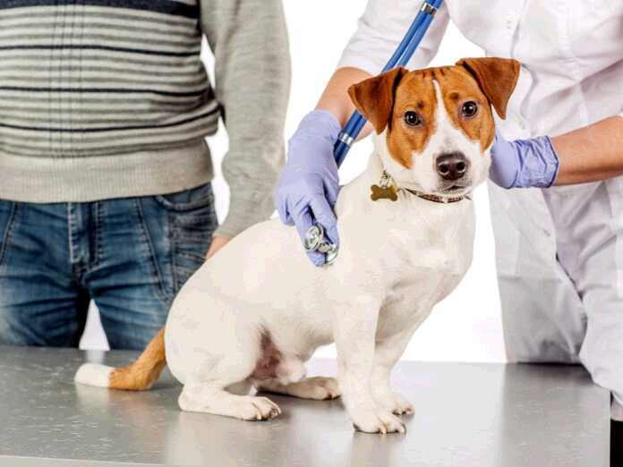 histoplasmosis could harm pets