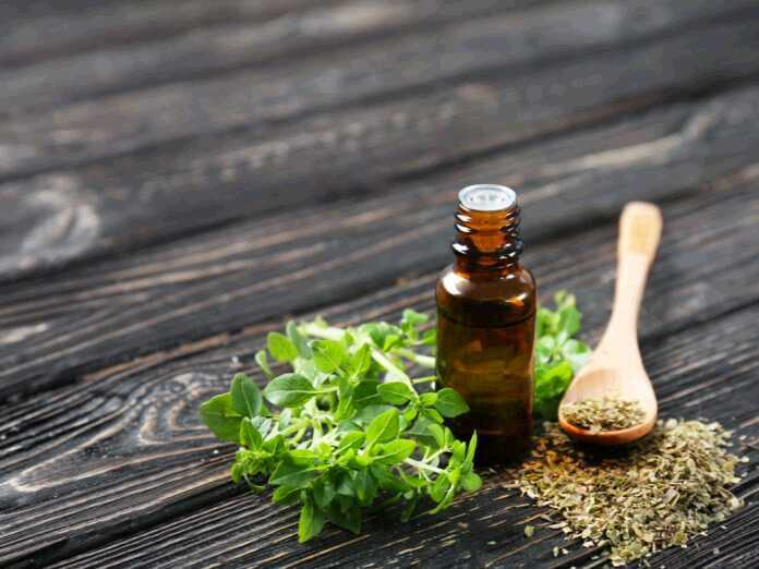 oregano oil to fight candida