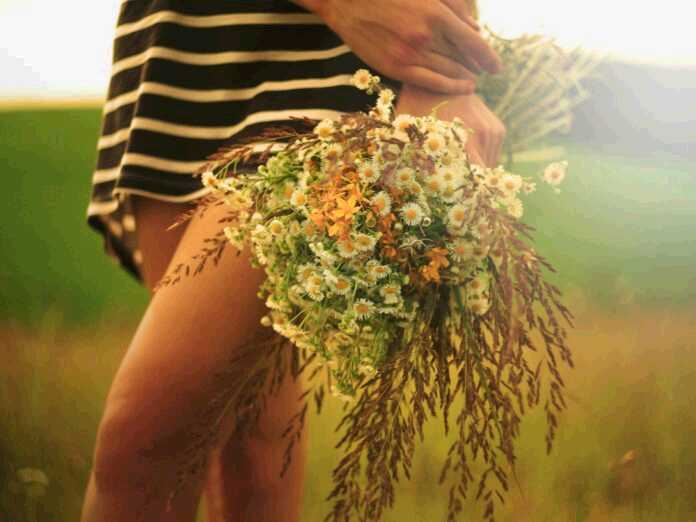 herb effective against Candida