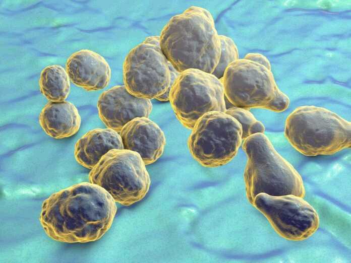 dangerous fungal infections